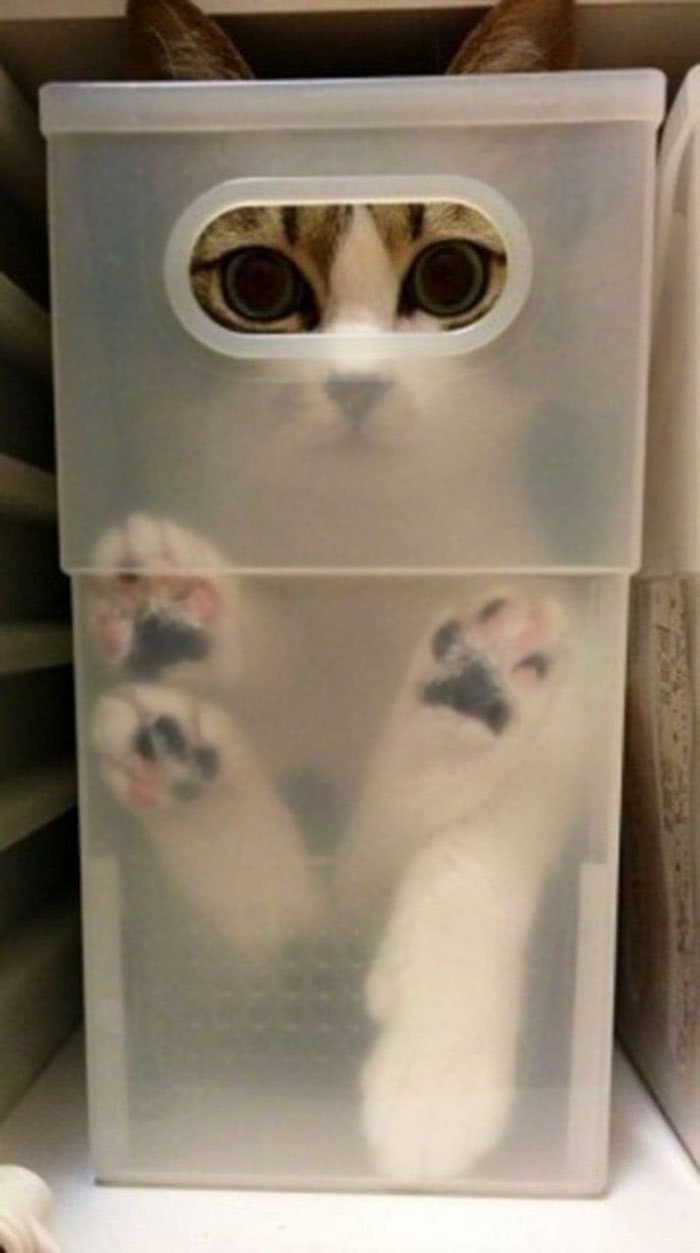 cats fitting into small places eyes