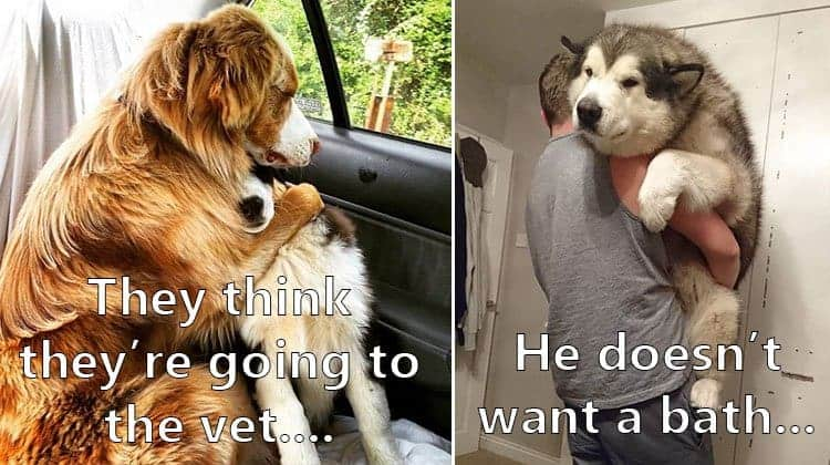 heartwarming-photos-of-dogs-that-will-make-you-melt-inside