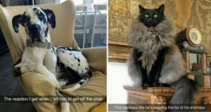 Animal-Related Snapchats You Need To See