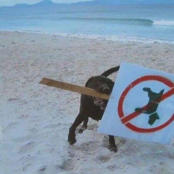 Badass Animals no dogs sign
