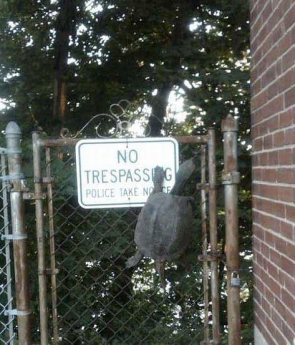 Badass Animals no trespassing