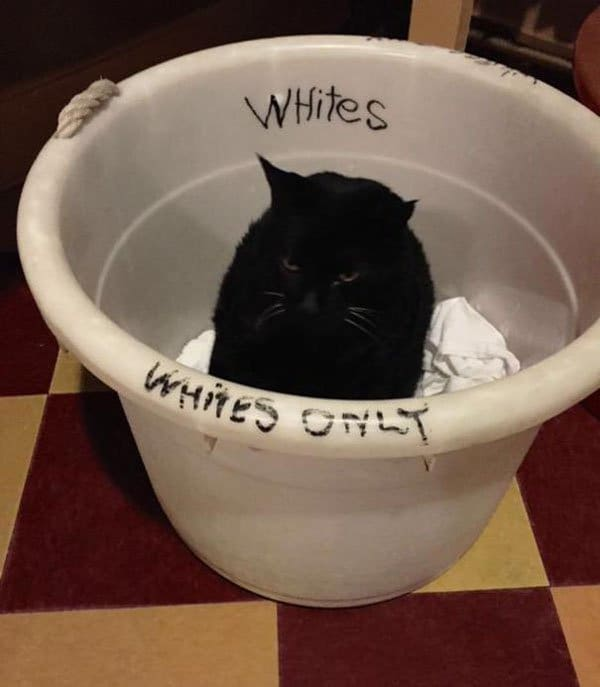 Badass Animals whites only cat
