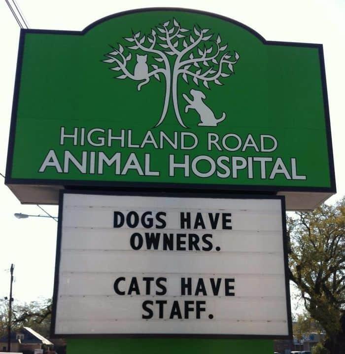 Genius Vet Signs cats have staff