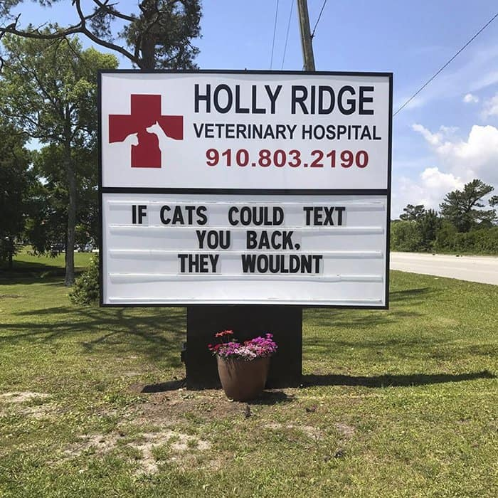 Genius Vet Signs if cats could text back