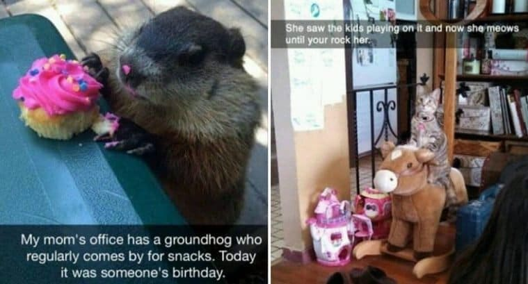 Hilarious Animal-Related Snapchats