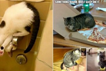 Hilarious Examples Of Cat Logic