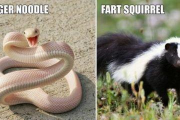 Hilarious Improved Animal Names