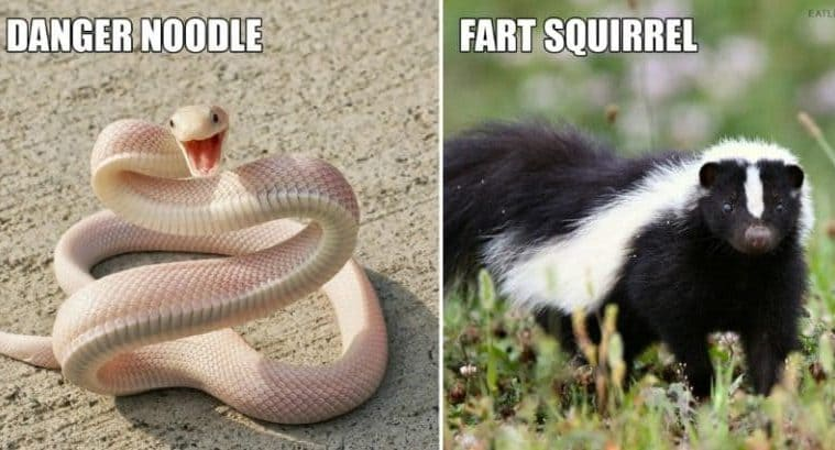 Hilarious Improved Animal Names