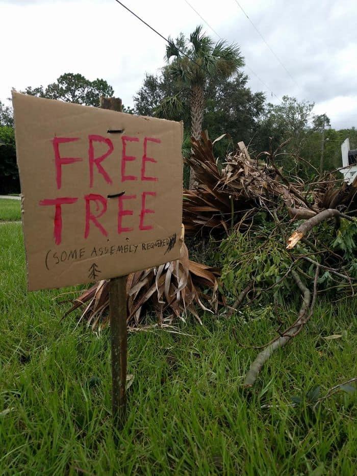 Hurricane Irma free tree