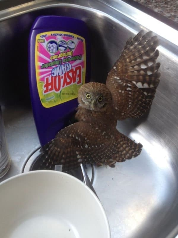 'I Woke Up To This' Moments baby owl in sink