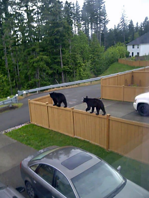 'I Woke Up To This' Moments bears on fence