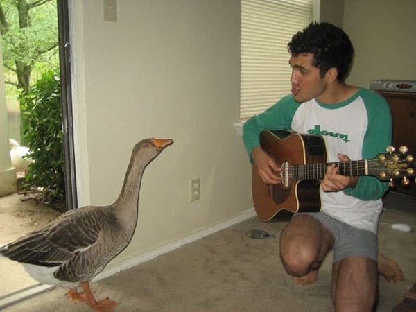 'I Woke Up To This' Moments serenading duck