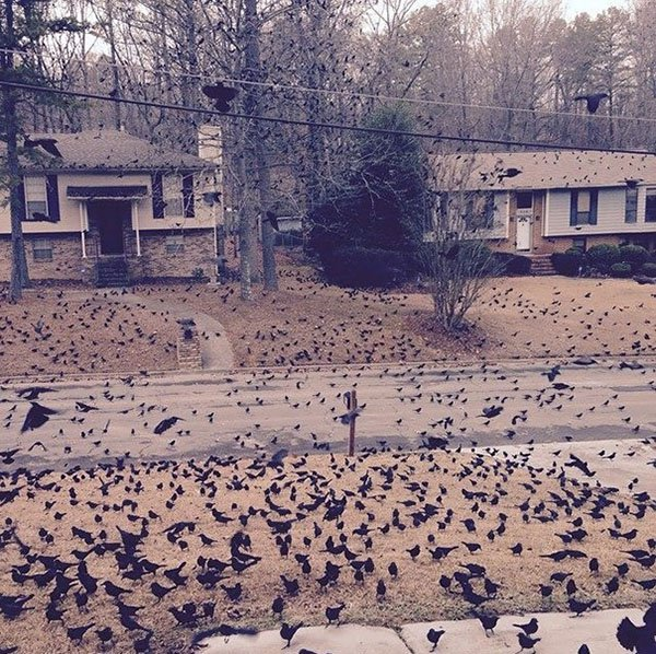 'I Woke Up To This' Moments ton of birds