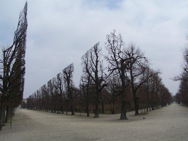 Interesting Photos trees