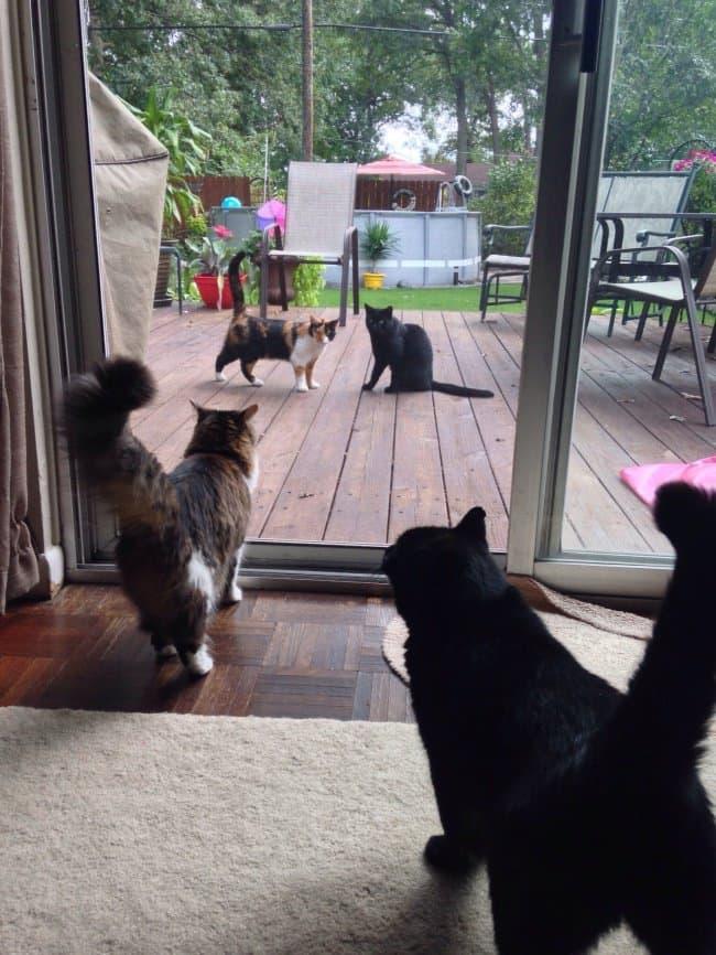 Interesting Photos window or mirror cats
