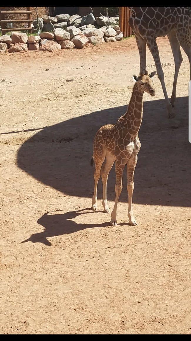 Misleading Photos unicorn giraffe