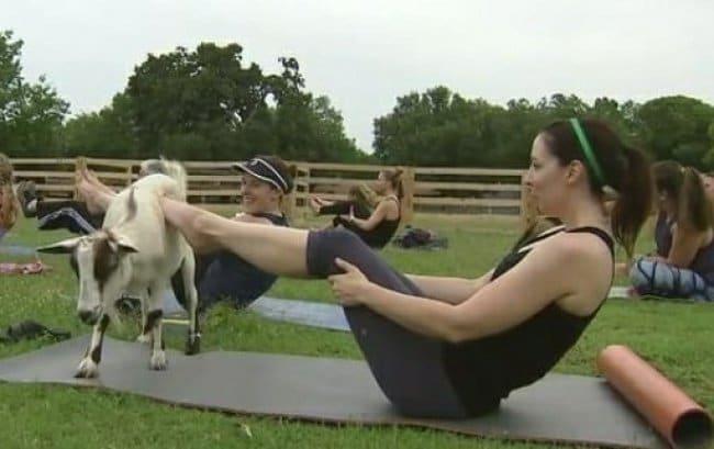 Misleading Photos yoga goat