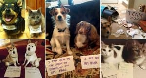 Pairs Of Adorable Animals That Are Partners In Crime