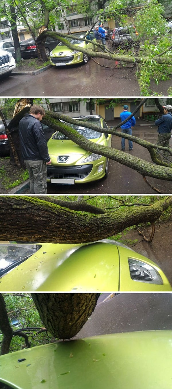 Rare Coincidences tree almost falling on car