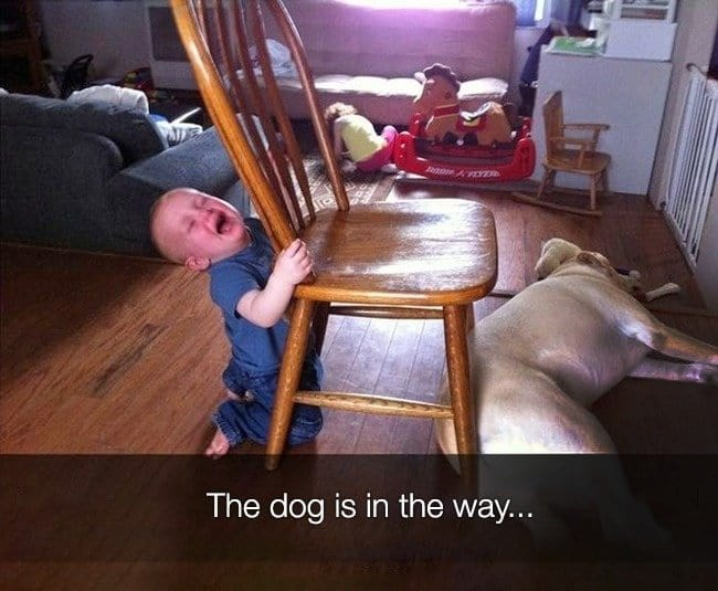 Reasons That Kids Had Major Meltdowns dog is in the way