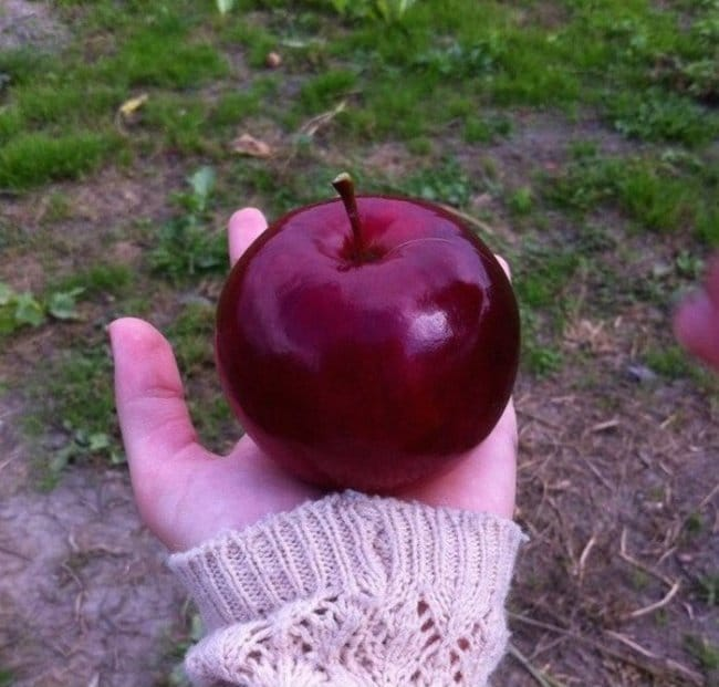 Satisfying Photos perfect apple