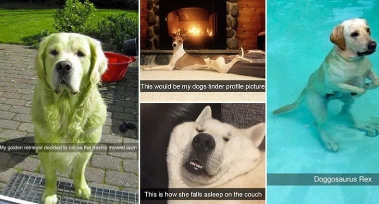 Snapchats-Involving-Dogs