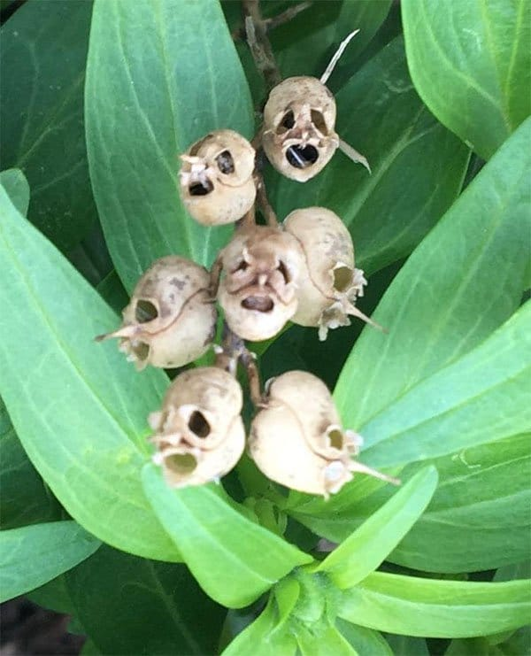 Terrifying Pictures Of Nature dead flower husks