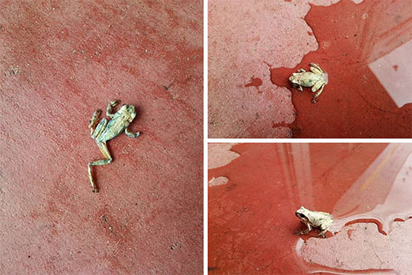 Terrifying Pictures Of Nature dried up frog