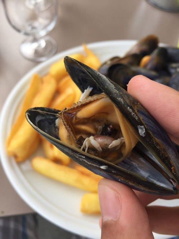 Terrifying Pictures Of Nature mussel half eaten crab