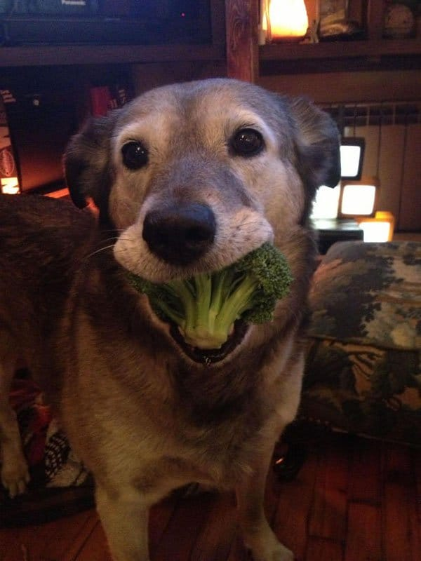 Times Pets Brought Their Owners Unexpected Gifts brocolli