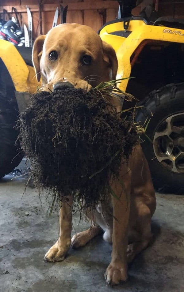 Times Pets Brought Their Owners Unexpected Gifts dirt