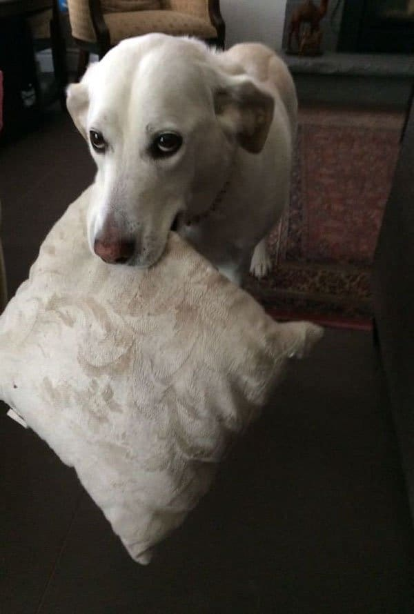 Times Pets Brought Their Owners Unexpected Gifts pillow