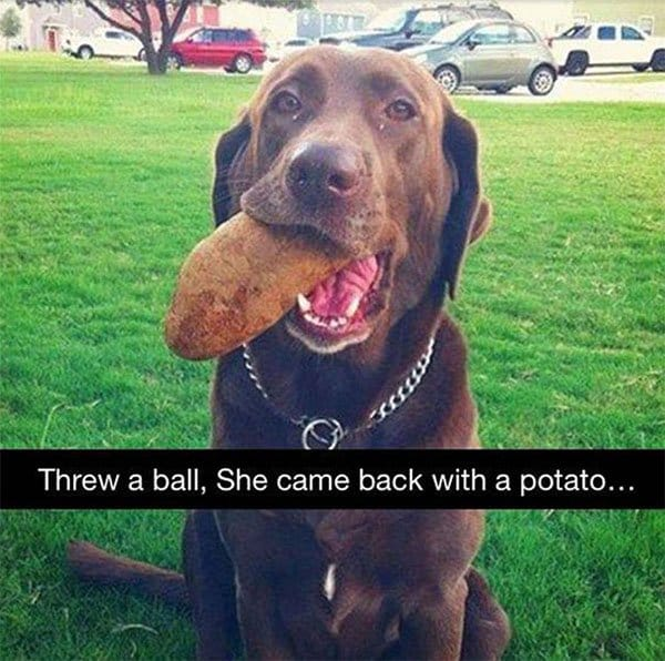 Times Pets Brought Their Owners Unexpected Gifts potato