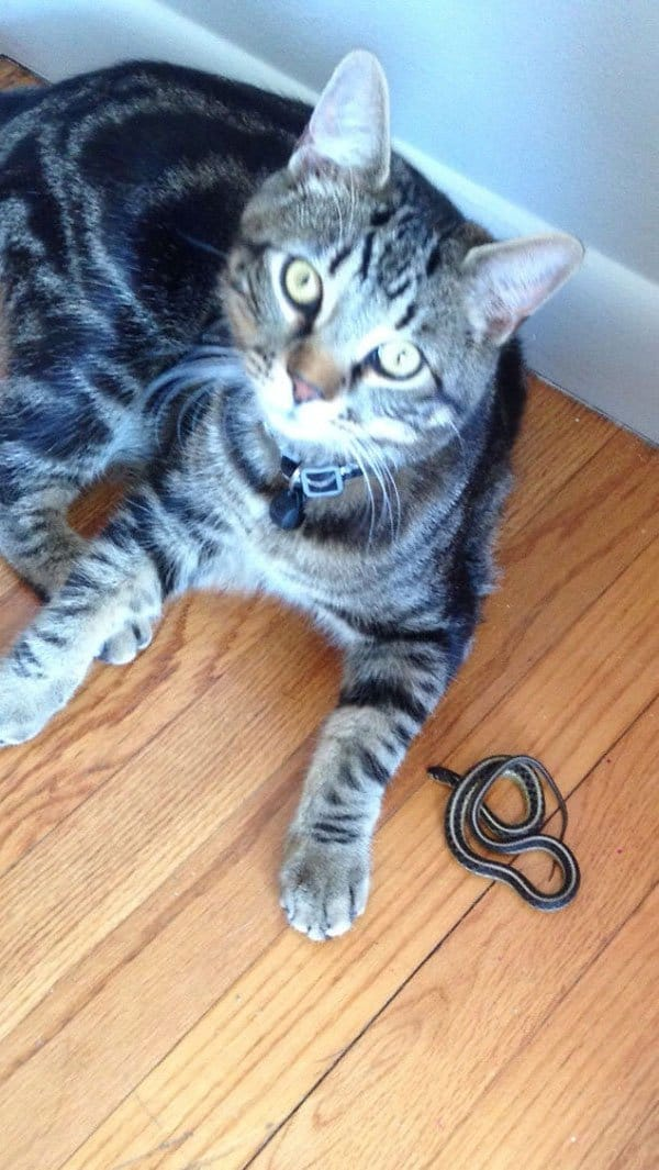 Times Pets Brought Their Owners Unexpected Gifts snake