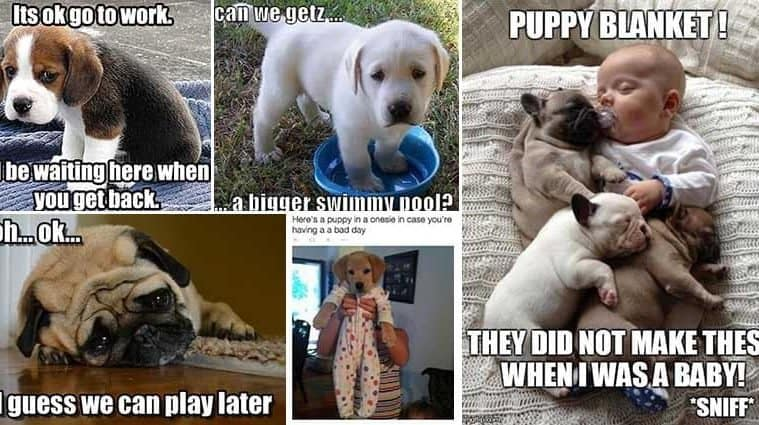 Adorable Images Of Puppies