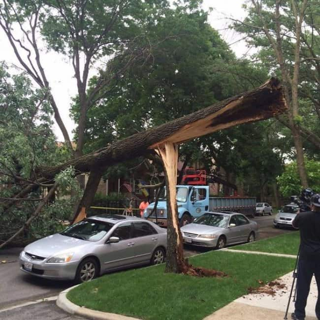 Amazing Coincidences tree missing car