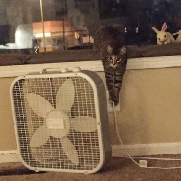 Animals Being Total Jerks can unplugging fan