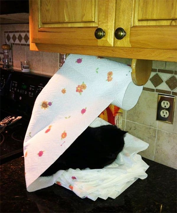 Animals Being Total Jerks cat on kitchen roll