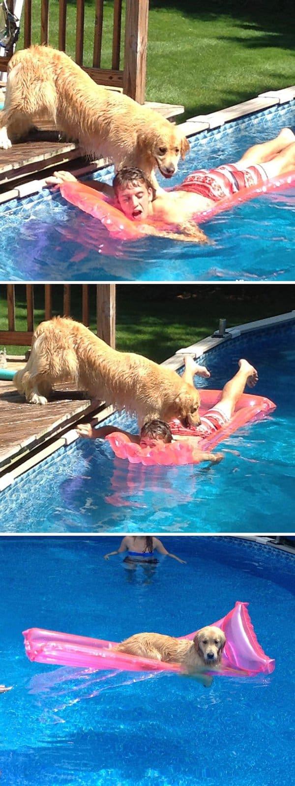 Animals Being Total Jerks dog raft