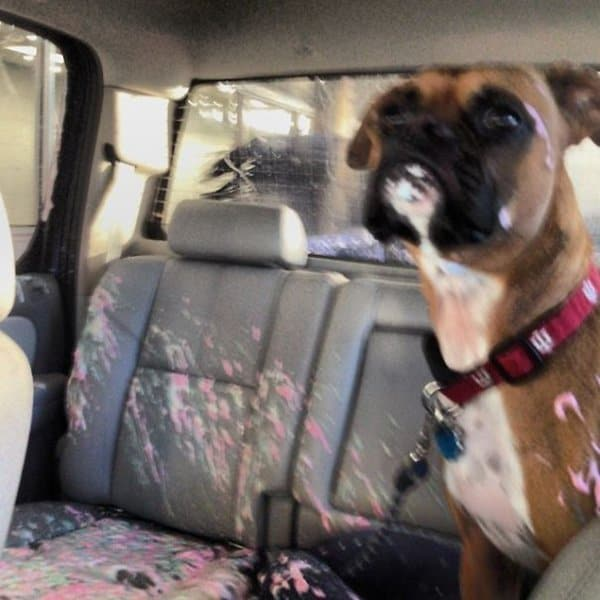 Animals Being Total Jerks opened window car wash