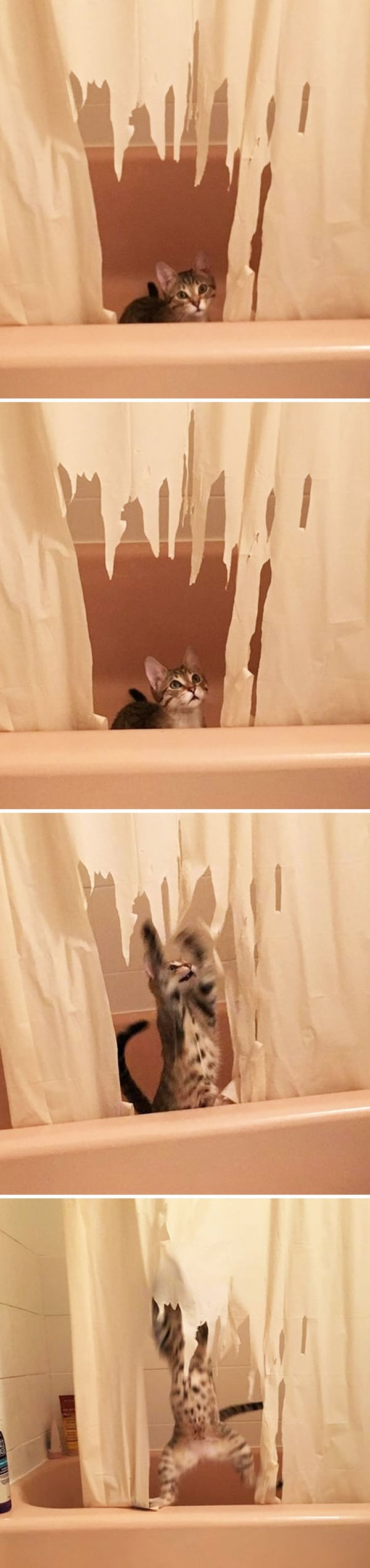 Animals Being Total Jerks ripped shower curtainAnimals Being Total Jerks ripped shower curtain
