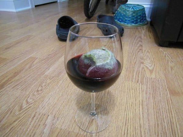 Animals Being Total Jerks tennis ball in wine