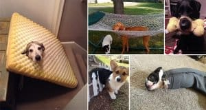 Dogs That Are Acting Hilariously Casual