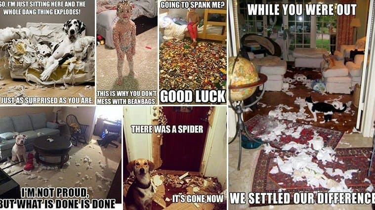 Hilarious Mess-Filled Images