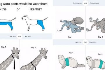 How Would A Dog Wear His Pants