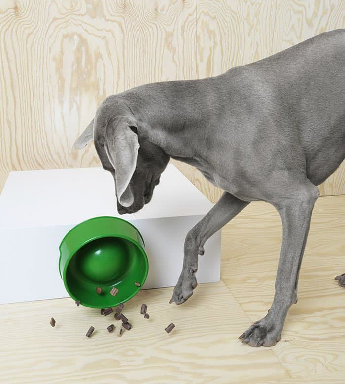 IKEA Pet Furniture Collection dog bowl fallen over