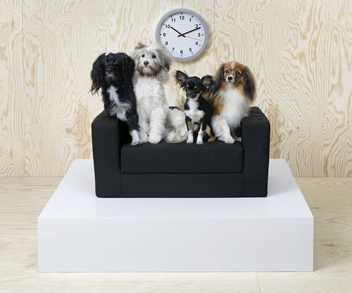 IKEA Pet Furniture Collection dogs on sofa