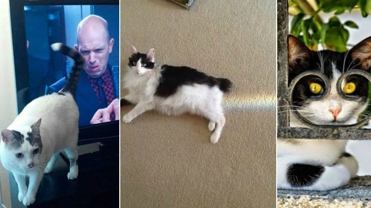 Perfectly Photos Of Cats