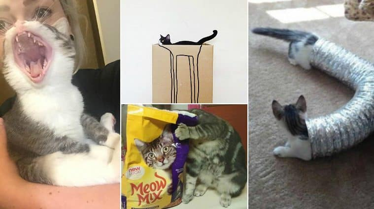 Perfectly Timed Photos Of Cats