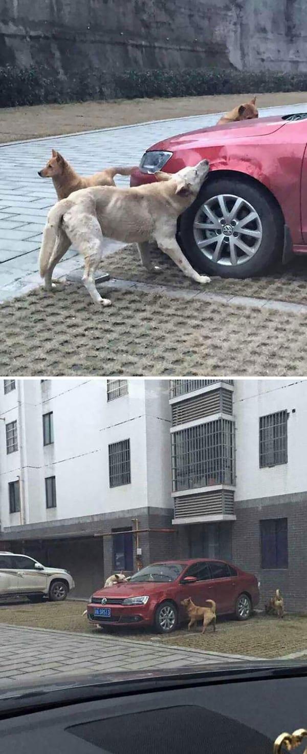 Revenge Stories trash car kicked dog